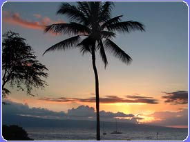 A typical Maui sunset and palm tree with the island of Lanai in the background marks the end of another day in paradise. Sunset is celebrated by locals and visitors alike. Our Paki Maui rental condo is the perfect place to watch the Maui sunset unfold and relax in your own private Kaanapali vacation rental condo in Maui.